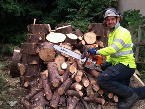 Seasoned and freshly cut logs for sale